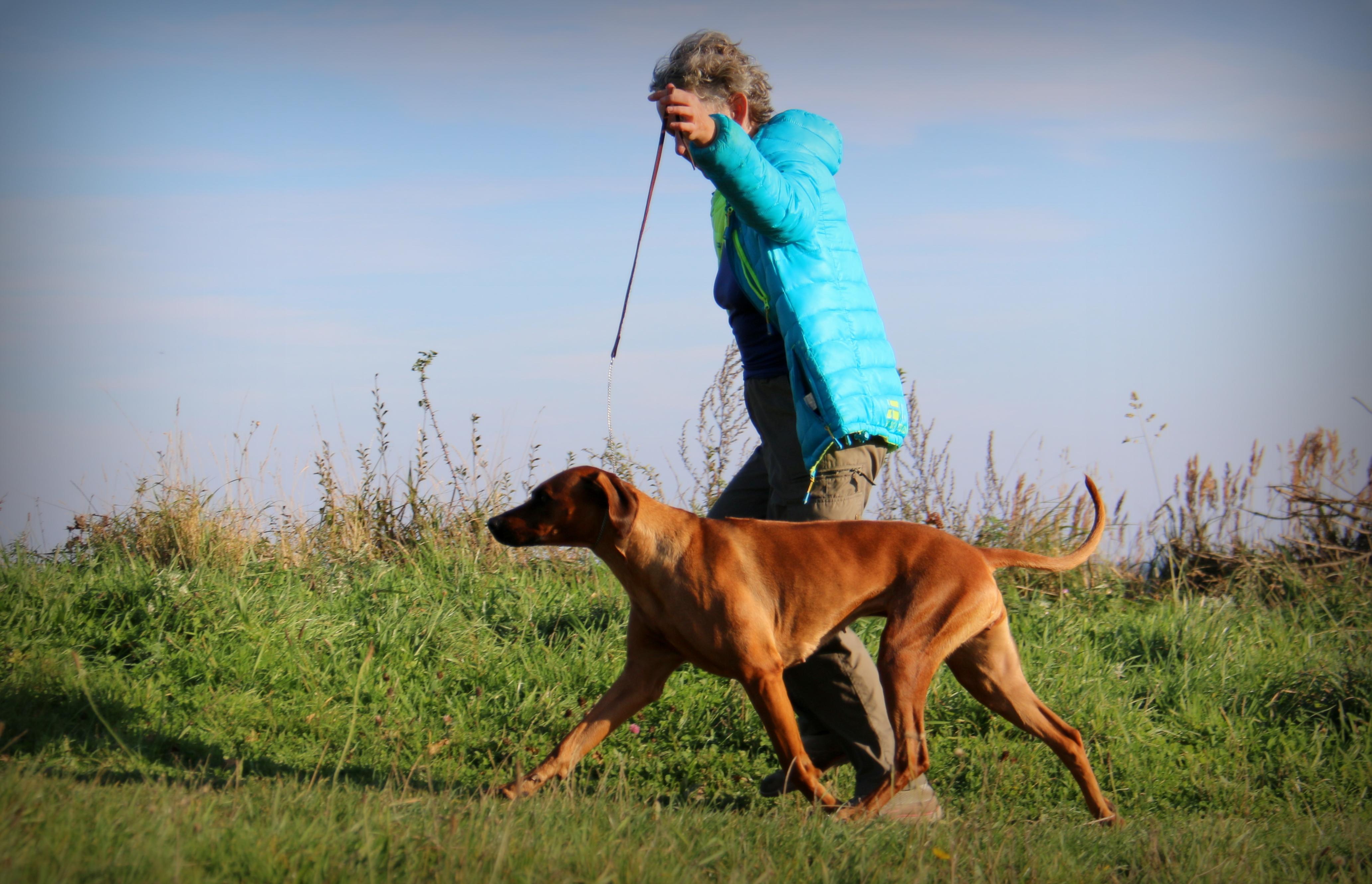 Ida on the gait